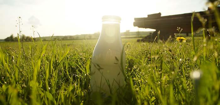 Milchflasche im Gras