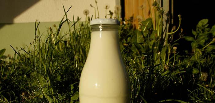 Milch im Gras stehend