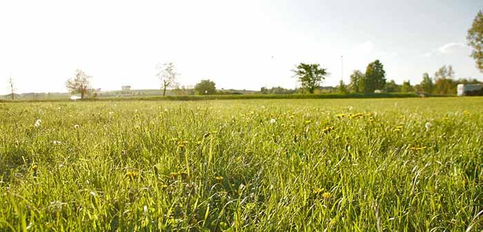 Grüne Weide mit Sonnenschein.