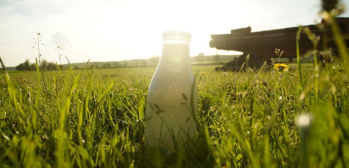 Eine Milchflasche steht auf der grünen Weide.