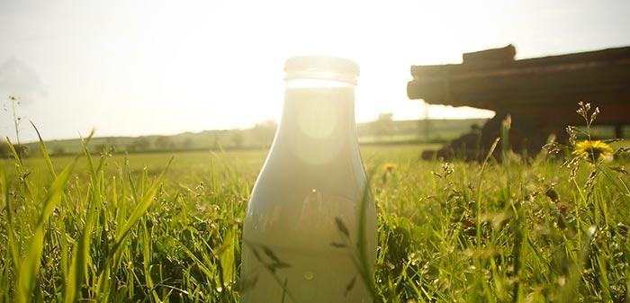 Milchflasche in der Sonne und Gras.